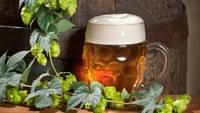Bier mit Hopfenpflanze